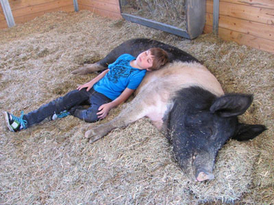 На ферме Gentle Barn