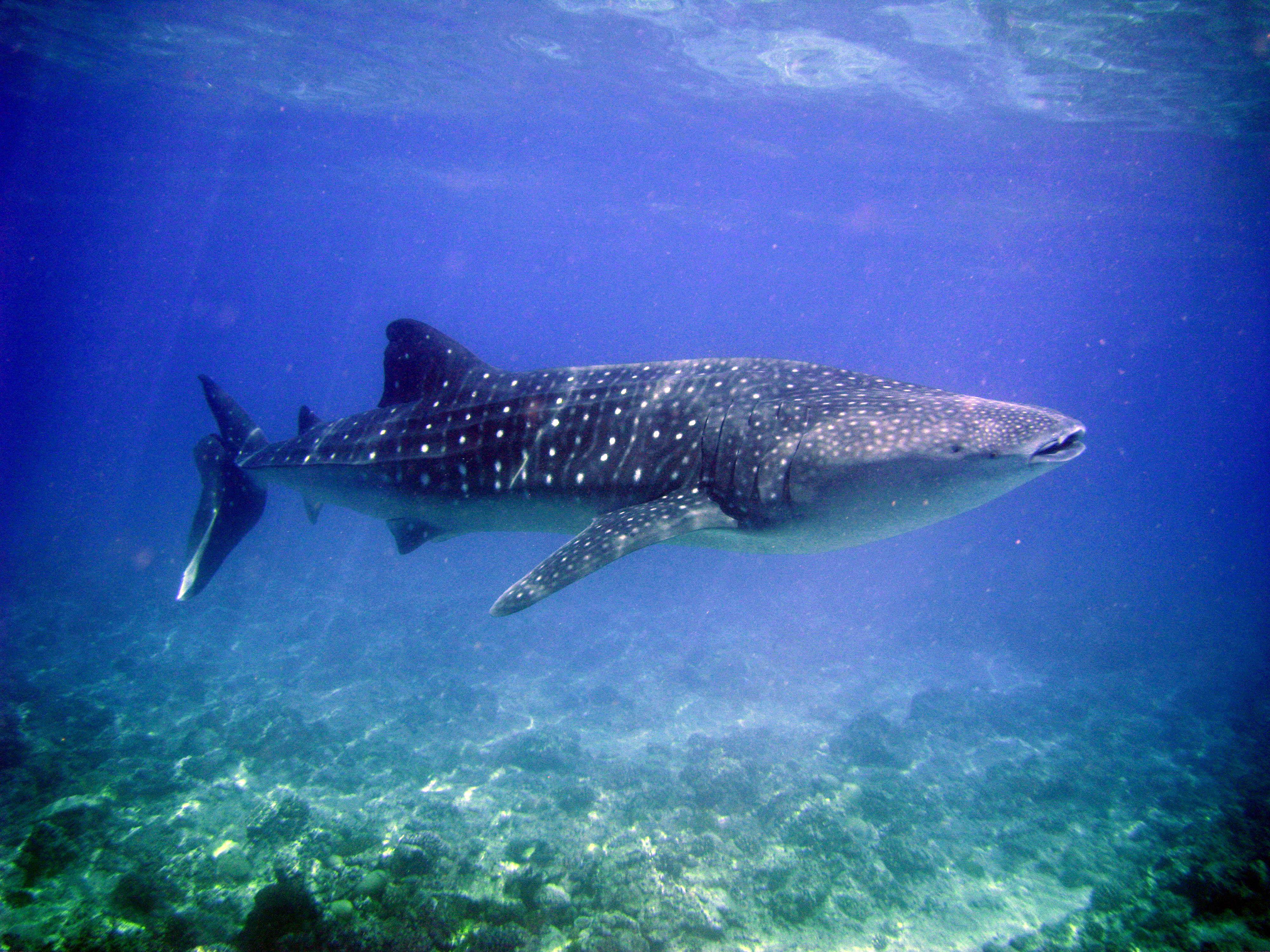 Bimini Sharklab 2018 All You Need To Know Before Go With Photos Tripadvisor