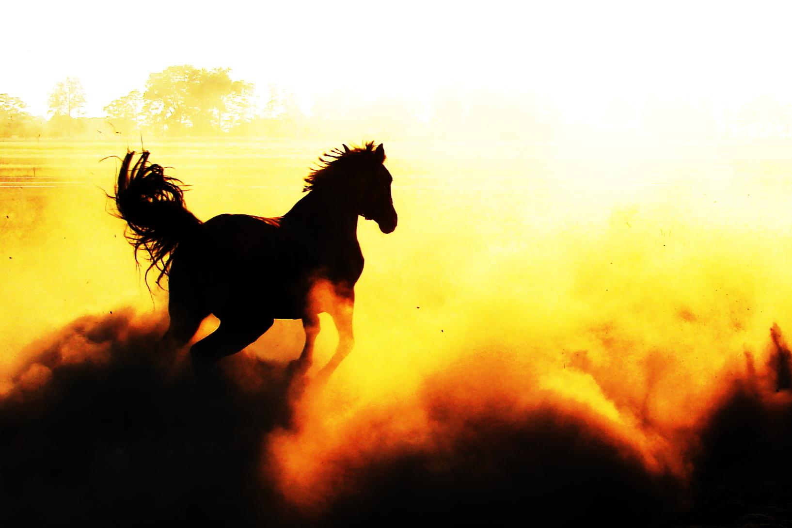 Black Hills Wild Horse Sanctuary Change By Doing