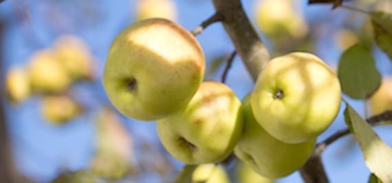 applesSM