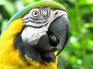 close up of green parrot head