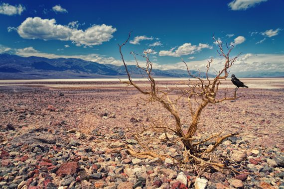 desert bare